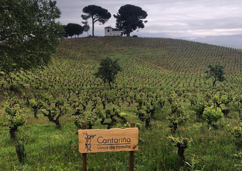 Spain winery