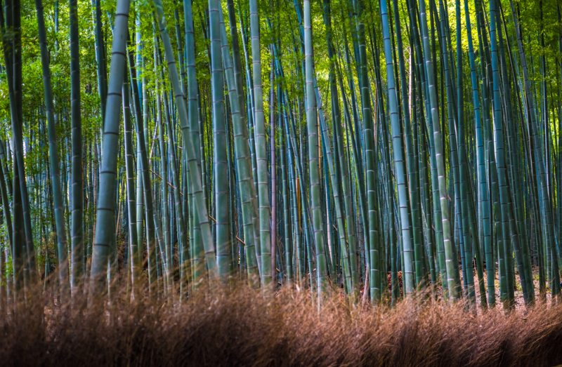 Bamboo grove in Arashiyama, Kyoto, Japan