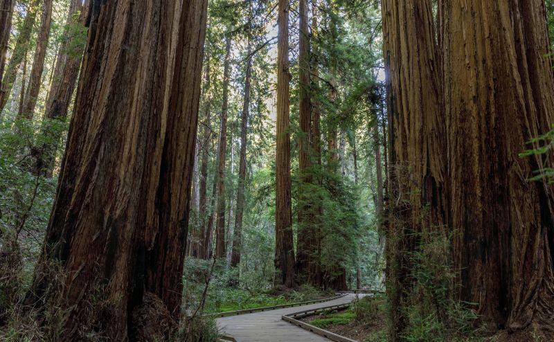 Muir Woods San Fransisco Day trip